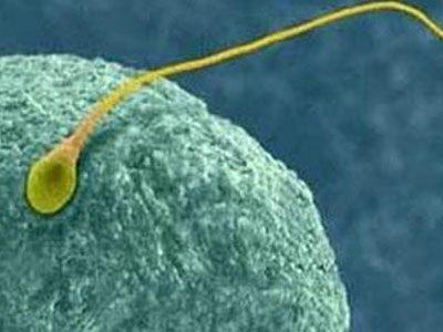 Πώς μπορεί να αυξηθεί η πιθανότητα επιτυχίας της εξωσωματικής γονιμοποίησης;