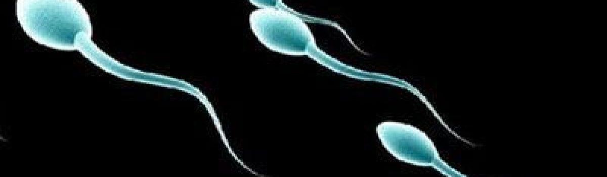 Το μήκος των σπερματοζωαρίων μπορεί να σχετίζεται με προβλήματα γονιμότητας